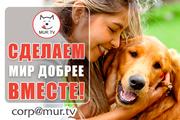 Животным помощь,  поддержка информационная
